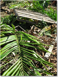 untreated/unpainted wooden pallet & palm fronds and other greenwaste